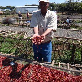 Costa Rica kafija Hermanos Umana
