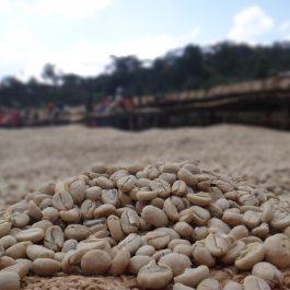 El Salvador SAN JOAQUIN kafija