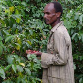 Ethiopia coffee Egu Abaye