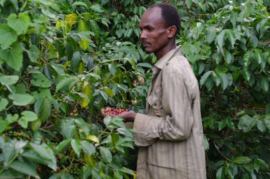 Ethiopia coffee Egu Abaye 3