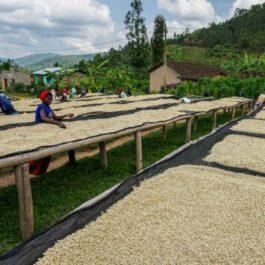 Ruanda kafija Gitega Hills